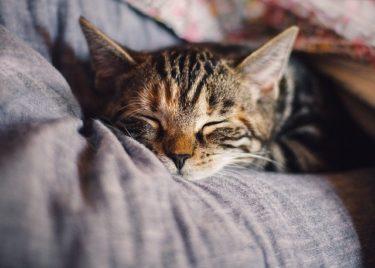 【睡眠不足撃退】効率良く疲れをとるには○○が重要だった!?